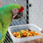 Food And Nutrition For Birds