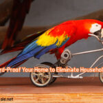 13 Tips to Bird-Proof Your Home to Eliminate Household Hazards