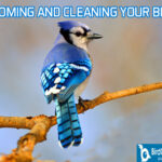 GROOMING AND CLEANING YOUR BIRD